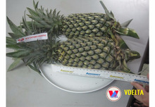 VIETNAM FRESH PINEAPPLE - WHOLESALE