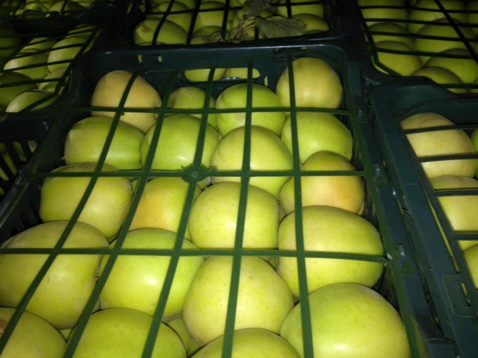 Fresh sugar Polish golden delicious apple for sale