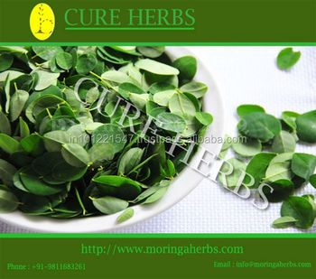 best moringa dry leaf from India