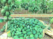 CHEAP PRICE PAPAYA PRODUCT