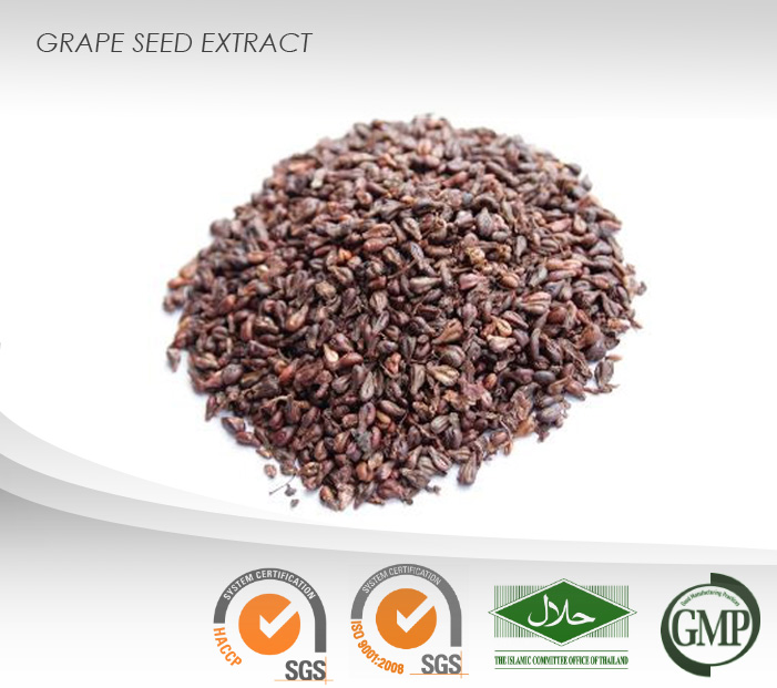 Grape Seed Powder Extract : 95% Proanthocyanidins, 50% Polyphenols : Ingredient for food supplement