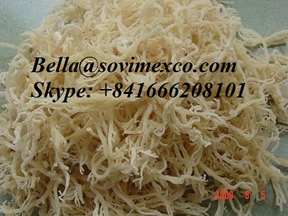 Dried Eucheuma cottonii/ spinosum_best choices for quantity/price