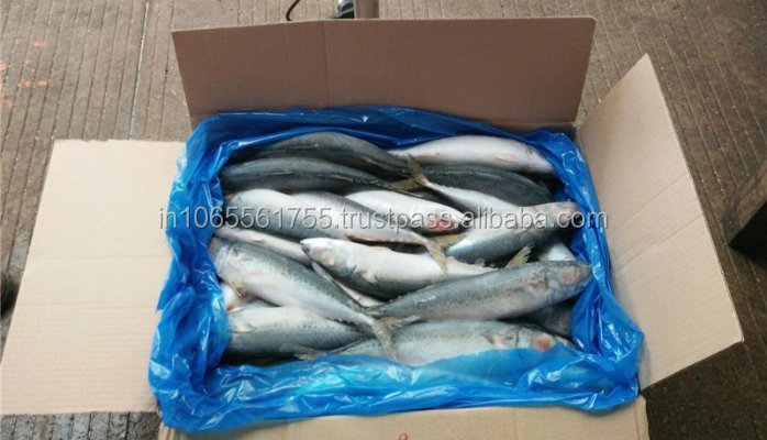wholesale price mackerel fish