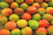 Good Quality Fresh Mangoes for sale