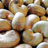 West Africa Quality Raw Cashew Nuts
