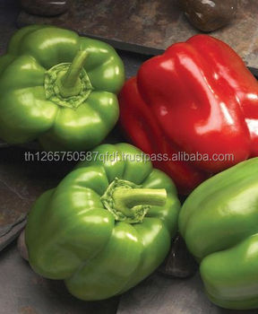 Green Bell Pepper/Capsicum hot sale