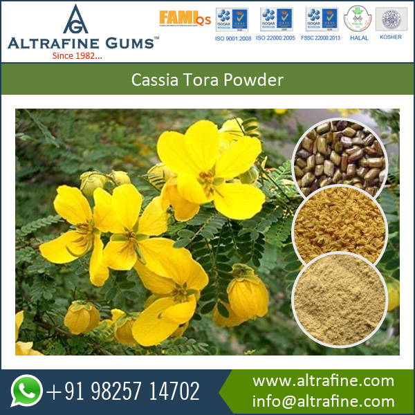 HALAL Approved Biggest Manufacturer of Cassia Tora Gum Powder