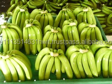 Banana / fresh yellow banana/fresh yellow rastali banana