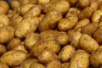 Fresh Potatoes Supplier in Egypt
