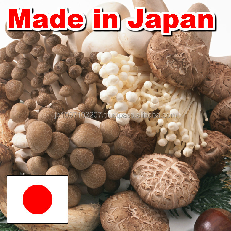 High quality and Traditional mushroom importers in japan dried mushrooms with Healthy made in Japan
