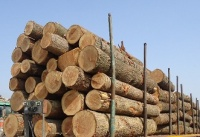 Pine, beech,acasia, spruce, birch, Oak fire wood