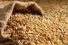 Animals Feed Barley with Cheap Price fast delivery