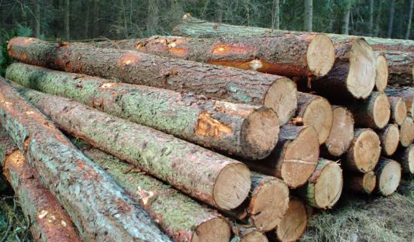 larch logs for sale