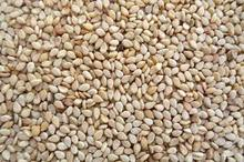 Nature white sesame seed-99/1/99.90