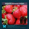 Strawberry extract, Fragaria ananassa Natural Extract, Fruitilla, Actives, Fruit extract