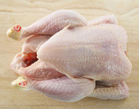 Frozen Halal whole chicken at factory prices