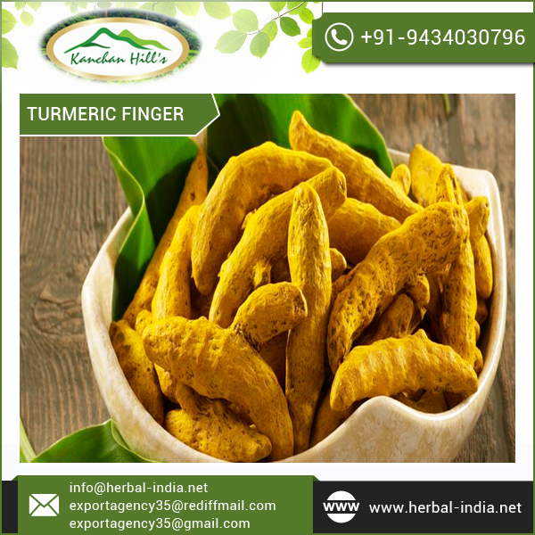 Standard Quality Turmeric Finger at Lowest Market Price