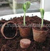 Seed Germination Cup for young plants growing in Nursery