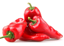 FRESH CHILLI / HOT PEPPER/ RED PEPPER