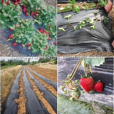 Black Agricultural PE Mulching Film For Strawberry Garden Flower
