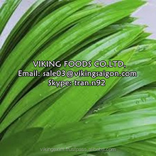 FRESH/FROZEN/DRIED/POWDER PANDAN LEAF - HIGH QUALITY
