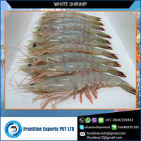 Head On/Shell On Fresh Frozen White Shrimp at Lowest Price