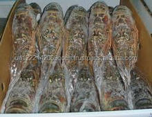 Frozen Sea Food Surimi Lobsters/Green Lobsters/Lobsters Tail and Slipper Lobsters