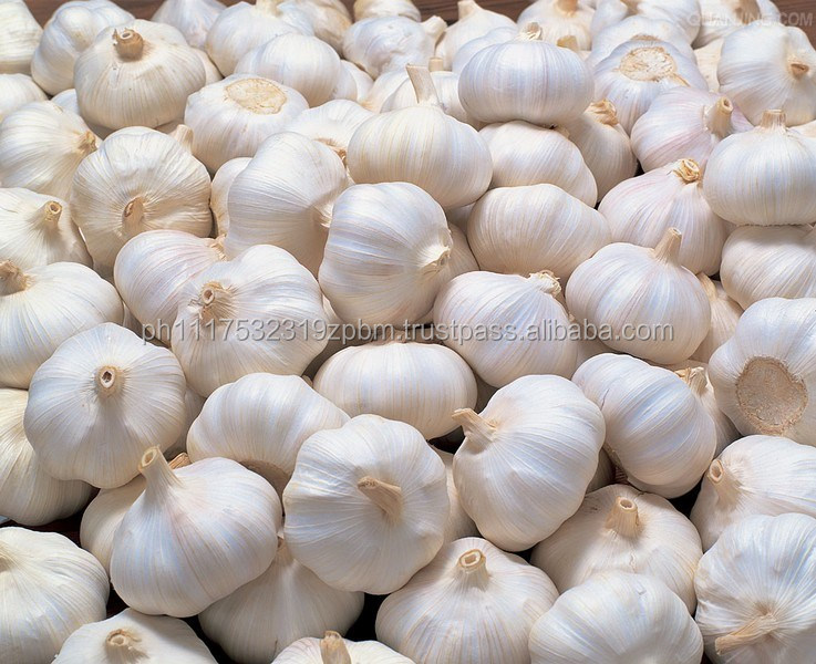 High Grade Fresh Garlic