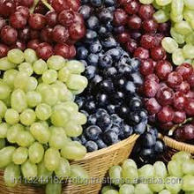 fresh grapes export india/black grapes ,white grapes,seedless grapes exporter