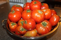 Fresh Tomatoes, wholesale with best prices