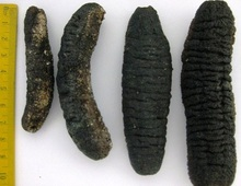Quality Dried Sea Cucumber