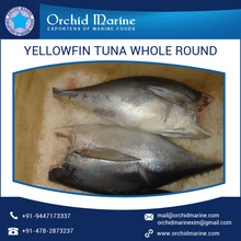 Wholesale Frozen Yellowfin Tuna Whole Round Price