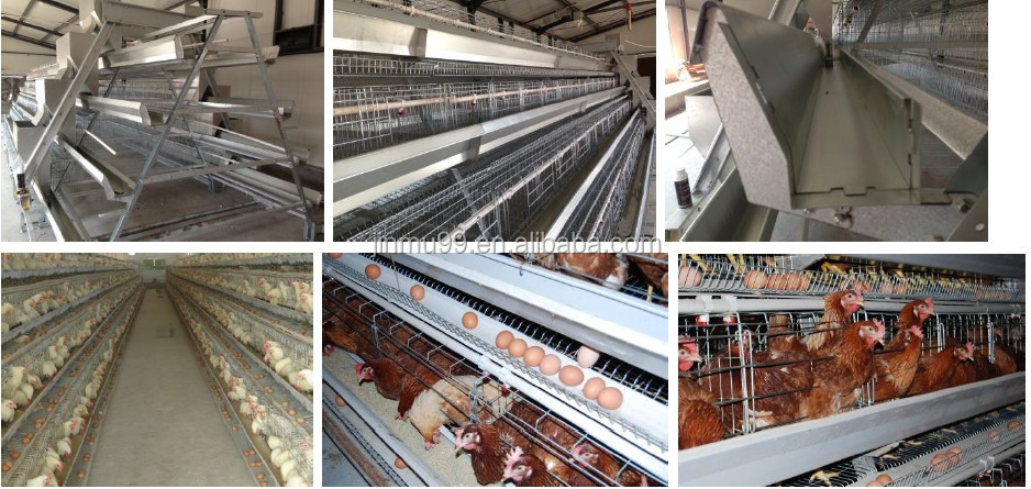 2017 Design Hot Selling Poultry Cage For Sale China Supplier