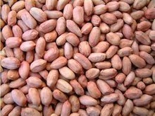Cheap peanuts in shell / without shell