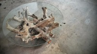 COFFEE TABLE Root Teak
