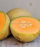 Galia Melon,Fresh Melons,Melon Product Type and Water Melon Type watermelon
