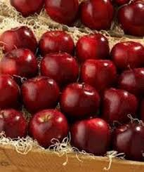 Export fresh Fresh red delicious apple fruit fresh apple/fresh apple fruit for sale :
