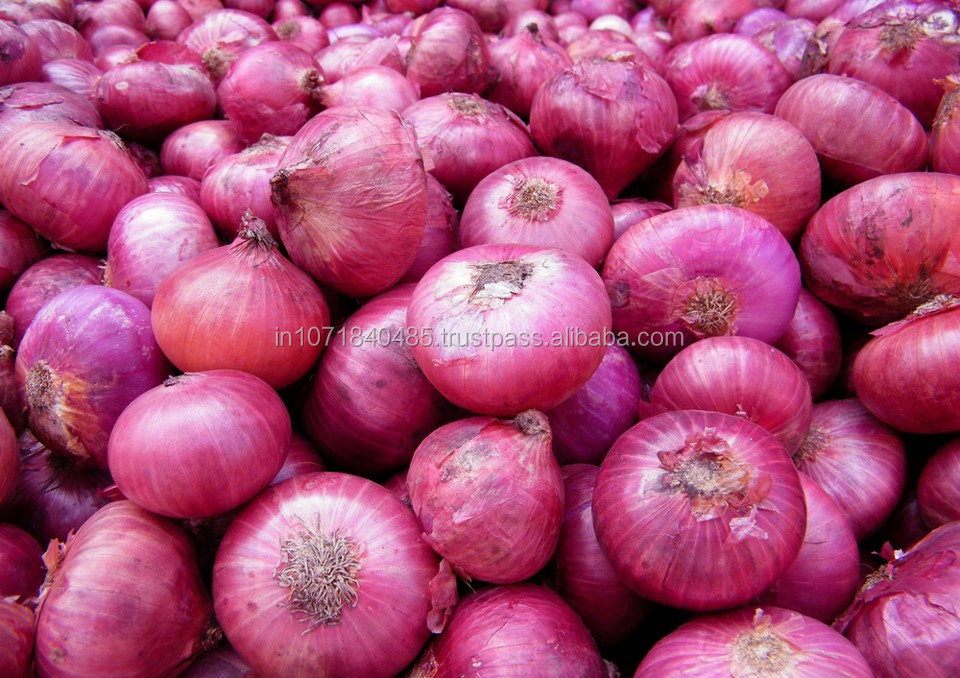Big Red Onion India