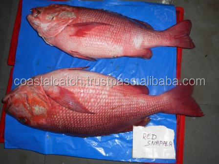 FROZEN RED SNAPPER