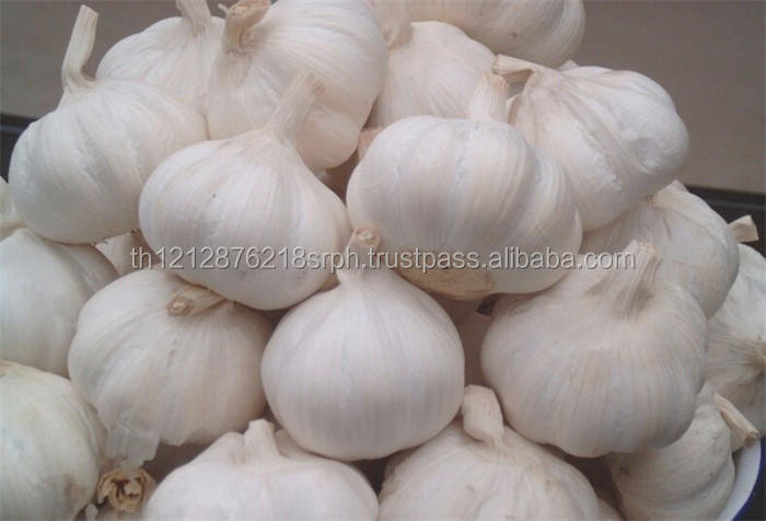 2017 fresh garlic cheap price