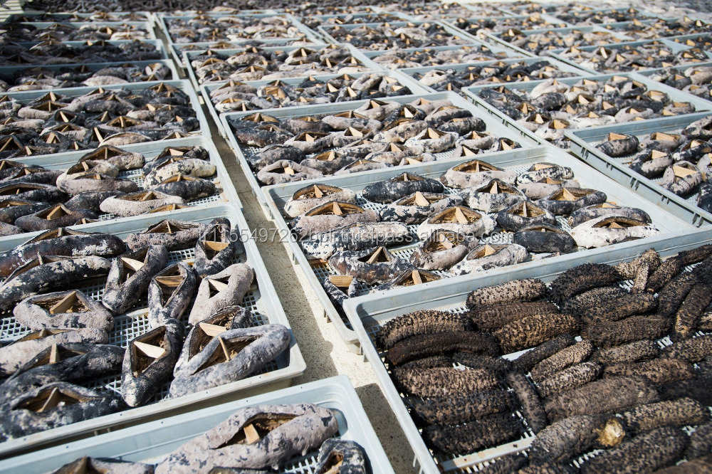 Standard grades and best of dried SEA CUCUMBER Best prices for largest sizes from.. China, Vietnam
