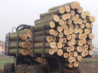 Sell Quality European Poplar Round Logs