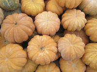 Pumpkins and Squash from Tunisia / Zucche di Tunisia / Courges et Potirons de Tunisie