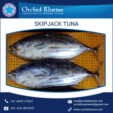 Wholesaler Supplying 100% Fresh Frozen Skipjack Tuna Whole Round for Sale