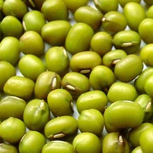 Quality Green Mung Beans for sale