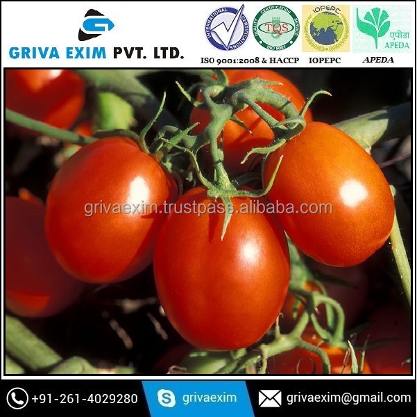 Dehydrated Tomato Exporters