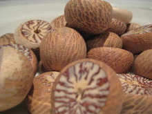 Grade A Quality Betel Nuts For Sale