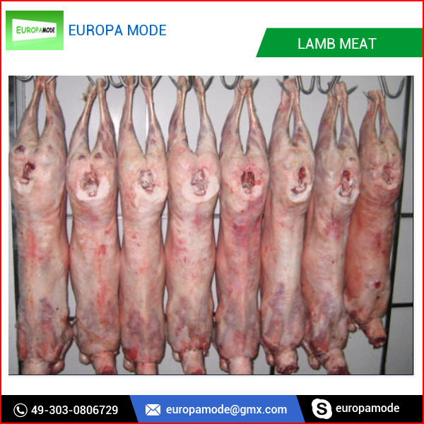 Branded Quality Whole Lamb Carcass at Best Rate
