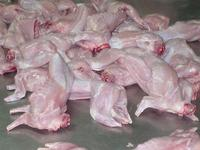 High Quality Frozen Whole Rabbit Meat / Frozen Rabbit Meat and Parts