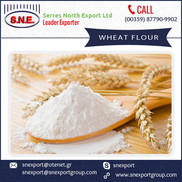 Wheat Grain Flour/Best Grain Wheat Flour from Industry's Top Exporter